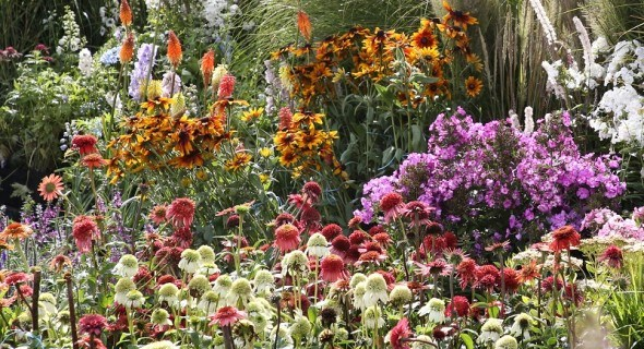 Ексцентрична ехінацея в дизайні саду: догляд, вирощування