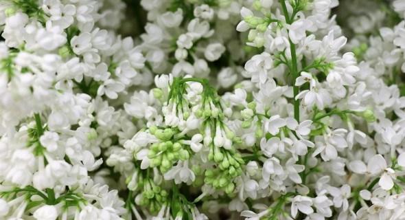 Цветники в мае: высеваем, делим и пересаживаем...