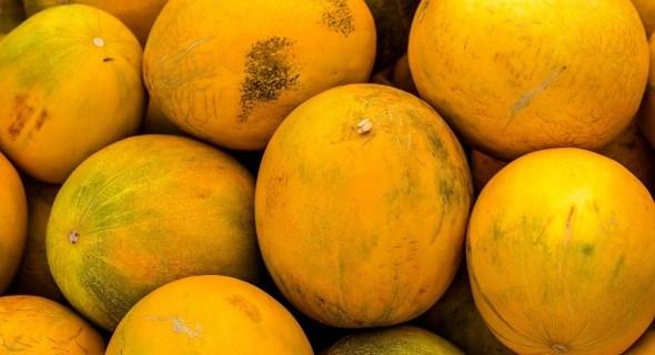 Вередлива диня: агротехніка вирощування у несприятливих для культури умовах