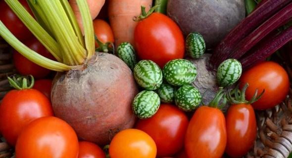 Особенности выращивания мелотрии