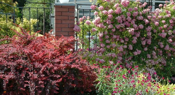 Квіти за огорожею: садові аристократи, агресори, красунчики та скромники...