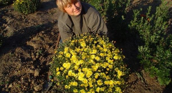 Принади осіннього саду: сорти хризантем групи мультифлора