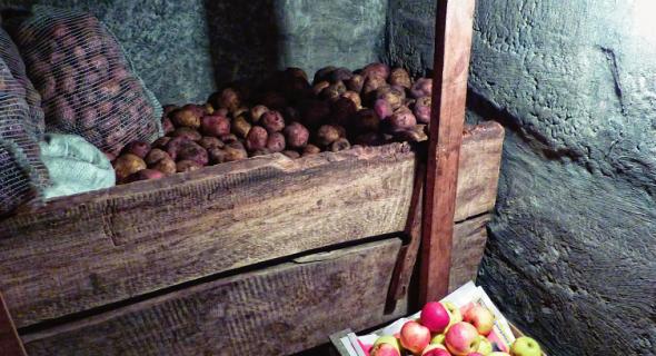 Строим погреб и готовим к приему овощей
