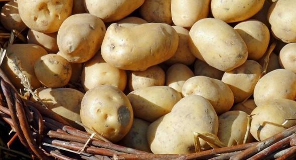 Врожай в найкращих умовах: як зберігати насіннєві та продовольчі бульби картоплі у погребі