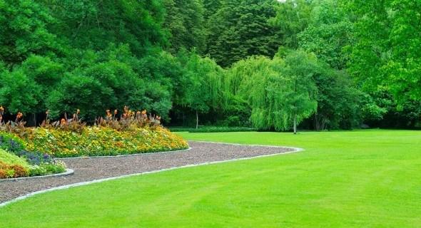 Теперь газон растет быстрее: посадка, посев и правильный уход