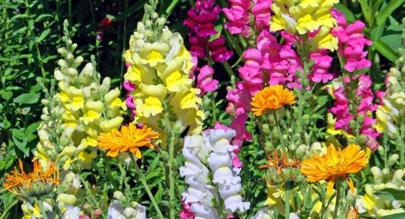 """Родом з дитинства: прикрашаємо садибу рослинами з """"бабусиного"""" квітника"""