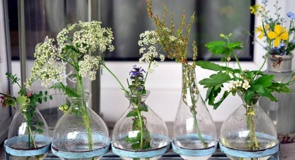 Без ґрунту під коренями: вирощування декоративних рослин методом гідропоніки