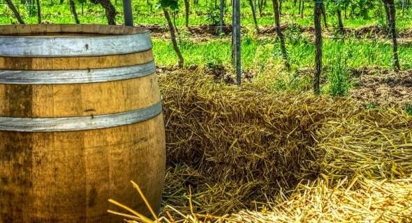 """Досвід домашнього виноробства: """"білий спосіб"""" приготування вина"""