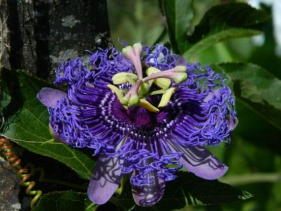 Цветок необычайный в Potager Etraordinaire