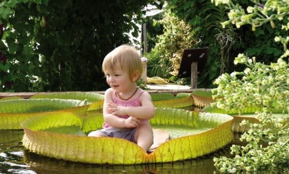 Необычные лилиии и ребенок на Potager Etraordinaire