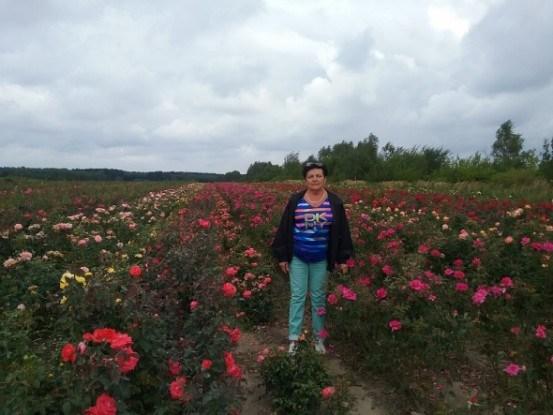 Болезни роз и их лечение