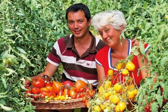 Мандрівка в країну велетнів: вирощуємо томатні сорти-гіганти