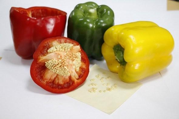 насіння на вся часи: заготівля насіння в серпні