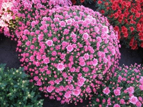 Akilon Pink