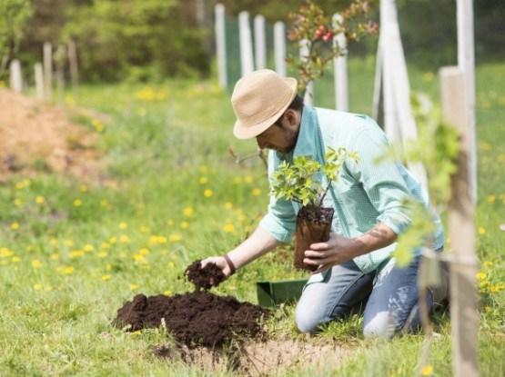 Требования плодовых и ягодных культур к почвенным условиям