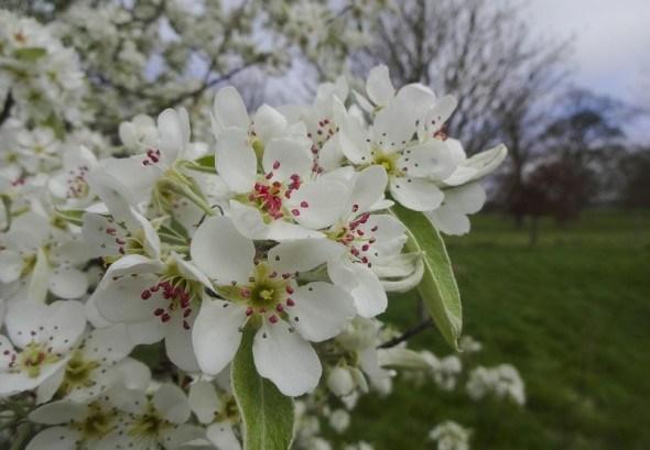 Сучасний захист яблуневого саду в ранньовесінній період