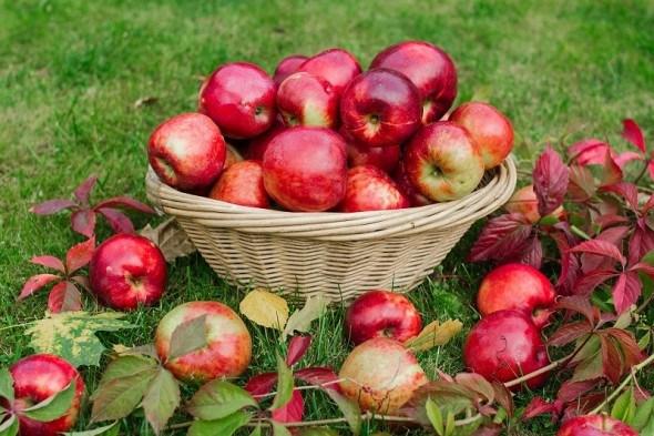 Вчасні поради: що потрібно робити в саду восени