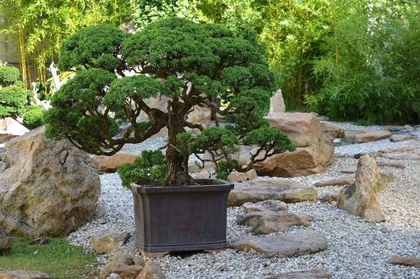 Дерево в чаші: опановуємо мистецтво створення бонсай
