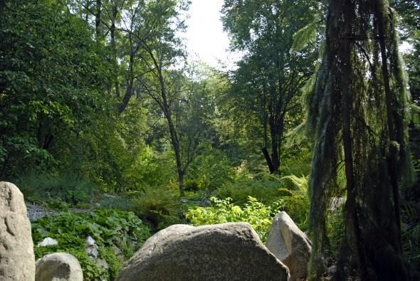 Деревья среди камней в Ogrod BUW