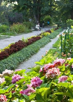Цветы в саду на крыше Ogrod BUW