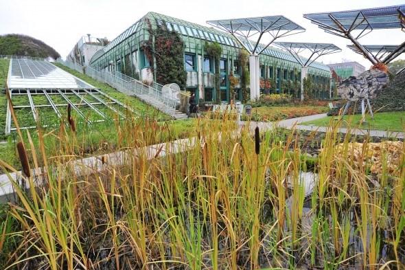 Растения на крыше  Ogrod BUW