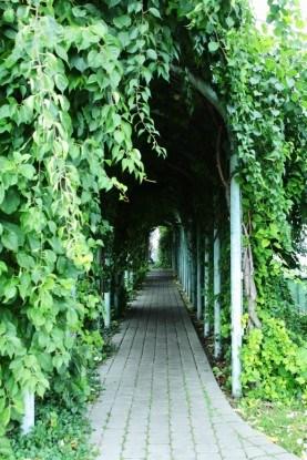 Зеленый коридор на крыше Ogrod BUW