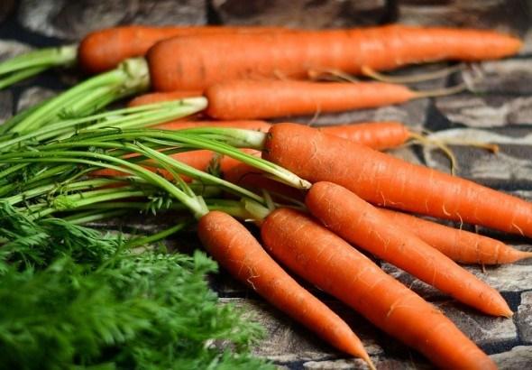 Болезни моркови в период хранения