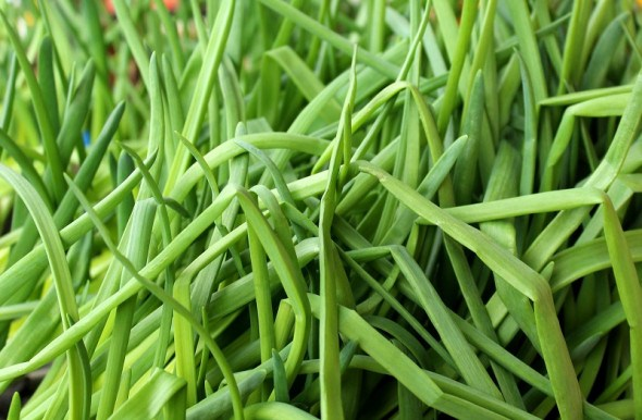 Садок зелений серед хати: зимова вигонка овочів