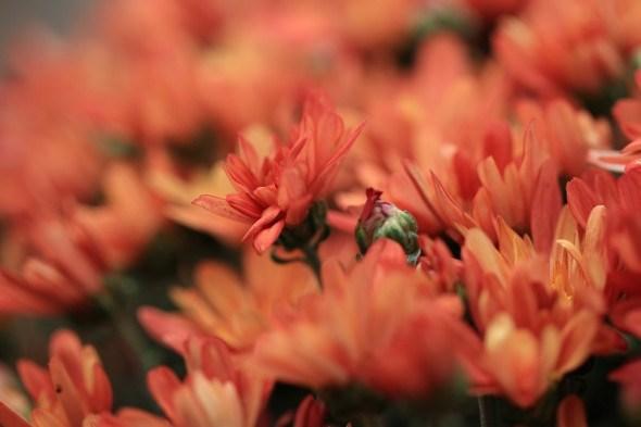 Квітник за сценарієм природи: роботи і терміни у листопаді