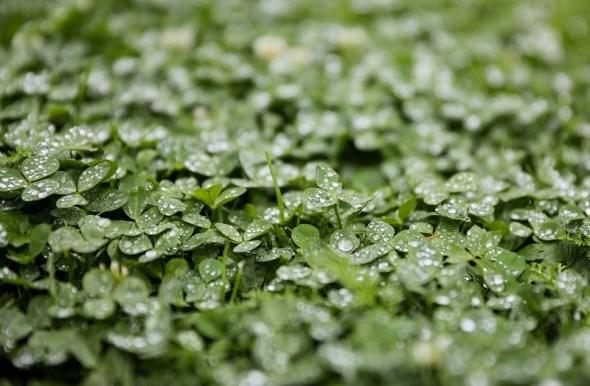 Огород в гармонии с природой: восстанавливаем почву в конце сезона