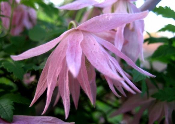 Милі та загадкові княжики: прикрашаємо садибу