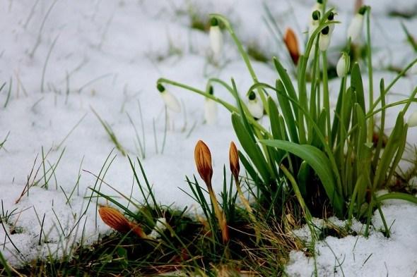 Календарь работ для цветоводов в феврале
