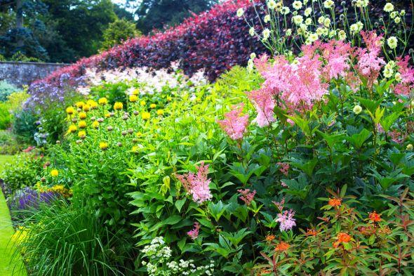 разновидности цветника