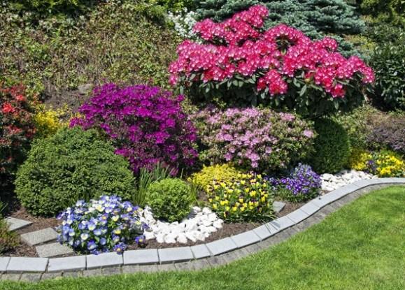 Цветник палисадник растения цветы