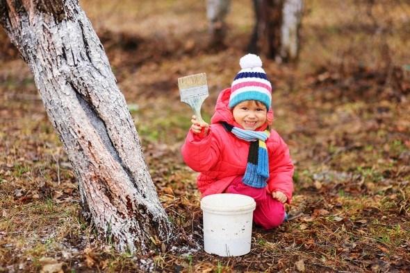 Ребенок белит деревья в саду осенью