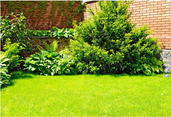 6 простых правил, как привести в порядок газон после зимы