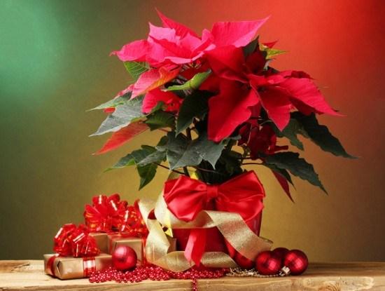 Рождественская звезда цветок декор