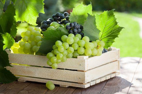 хранение винограда