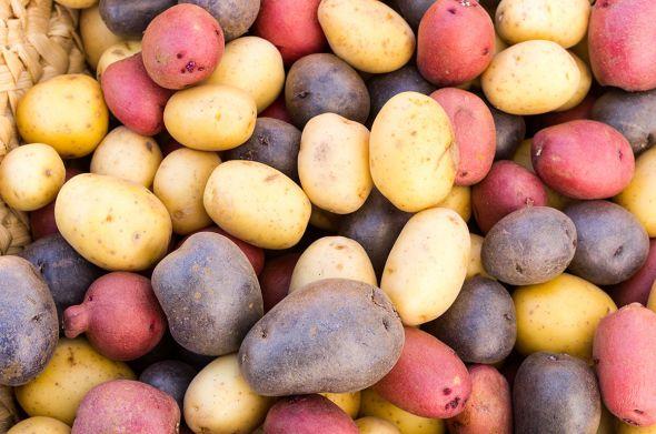 цветной картофеть