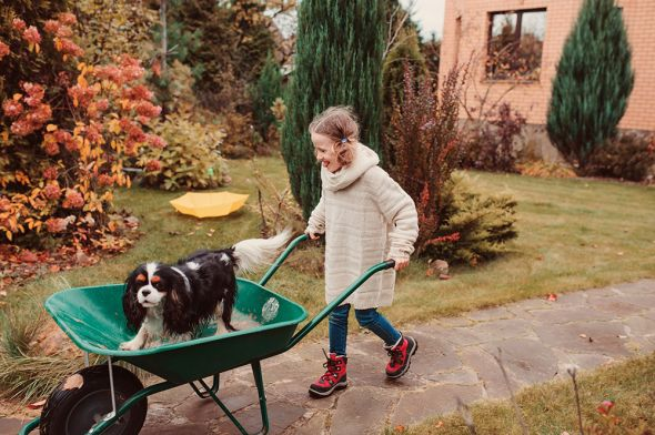 девочка с тачкой и собакой