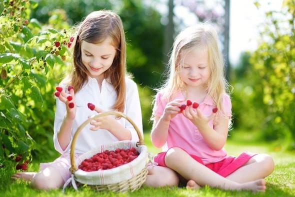 Работа на урожай: 7 секретов продуктивного плодоношения малины