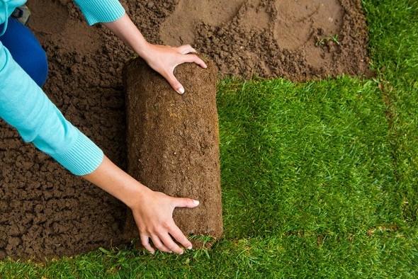 10 «вредных советов»: как наверняка погубить газон