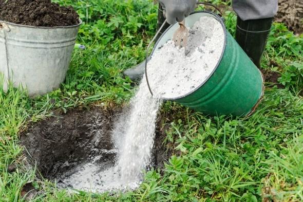 Золу из ведра высыпают в почву