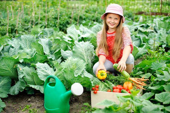 Какие культуры стоит выращивать начинающим огородникам