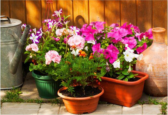 Большинство цветов высевают на рассаду с марта