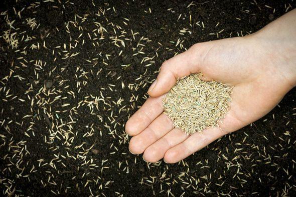 Посев газонной травы: выбираем оптимальные сроки
