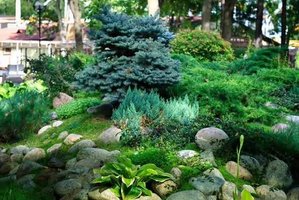 Зелень круглый год: выбираем хвойные растения для альпинария