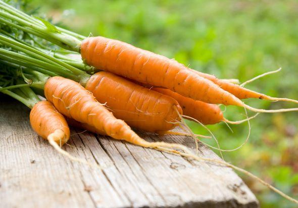 Сорта моркови очень многоликие, даже при кажущейся их «одинаковости»