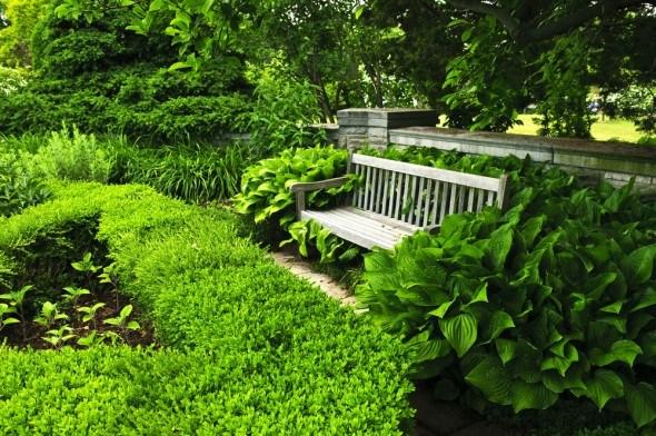 Королева тени: как использовать хосту в дизайне сада?