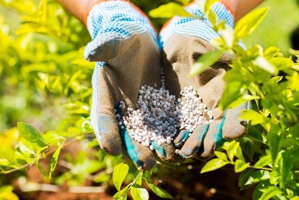 Хлор и бесхлорные удобрения: особенности применения и влияние на растения